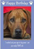 "Rhodesian Ridgeback-Happy Birthday - ""Are You Really THAT Old"" Theme"